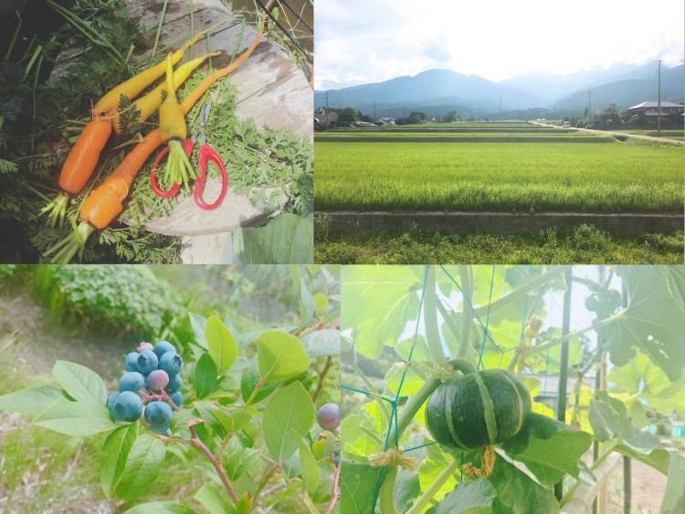 長野で農業